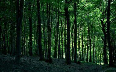 Ямские леса