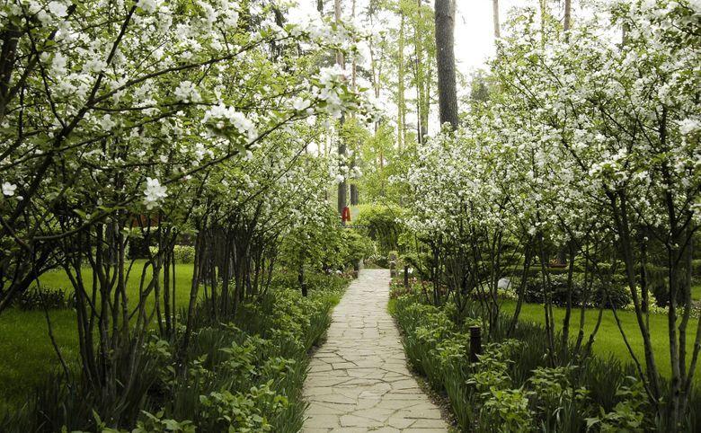 Яблоневый сад у дома