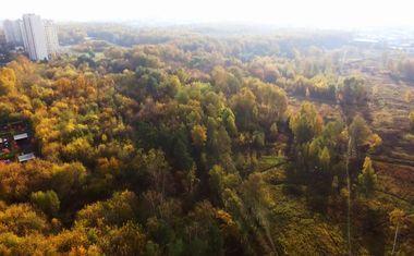 Лес Октябрьское радиополе