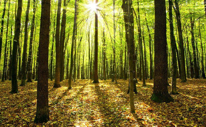 Комплекс в окружении лесных массивов