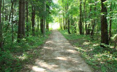 Дубковский лес