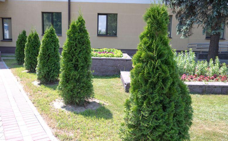 Благоустроенная территория с садом и брусчатой аллеей