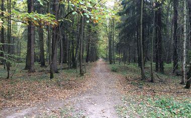 Говоровский лес