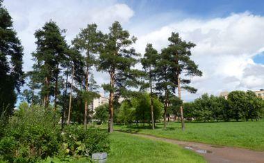 Парк Сосновая поляна